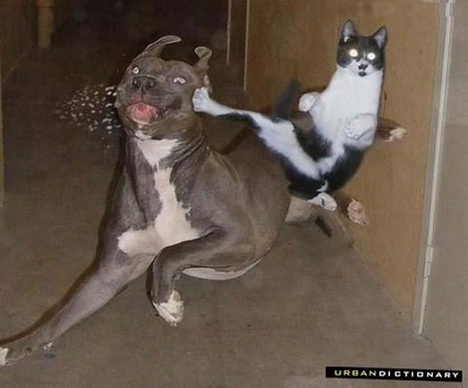 cat-vs-dog2.jpg